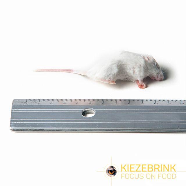 Kleine Muis 8-15 gr -10kg