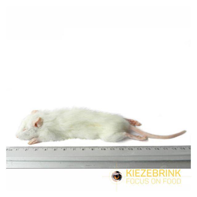 Kleine Weaner rat 25-60 gram -5 stuks