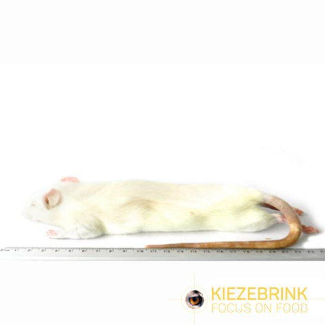 Grote Rat 250-350 gram -5 stuks