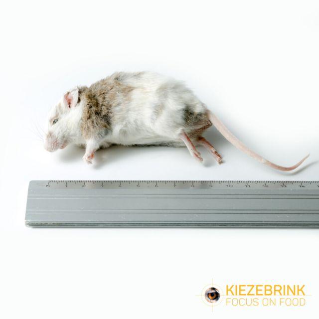 Veeltepeluis 25-40 gram -10 stuks